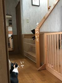朝からごちゃごちゃ - gin~tetsu~nosuke