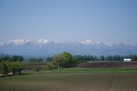 春の北海道へ - ふわふわ羊の布つくり