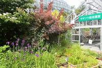 職員目線で、開花情報 - 手柄山温室植物園ブログ 『山の上から花だより』