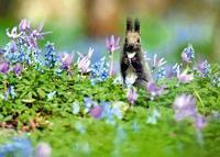エゾエンゴサクに魅せられて - 野山の花たち