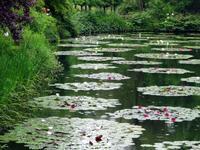 梅雨入りしましたね。~北川村「モネの庭」マルモッタン~ - リズムのある暮らし