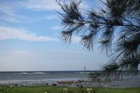 今回も行ってきました、奄美大島! - ブラッドノット/岡田裕師のフライフィッシング ブログ