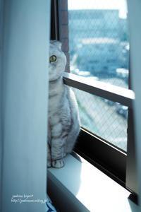 窓辺で - jumhina biyori*