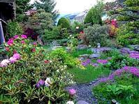 623、庭のシャクナゲ満開 - 五十嵐靖之 趣味の写真と短歌