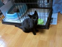 オスの黒猫 その名はマーク - 北軽1130