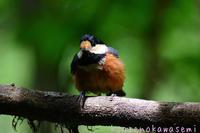 ヤマガラ - 気ままな生き物撮り