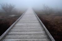 結局風邪でダウン - ナンちゃんの天然色写真&白黒写真