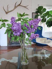 紫色でいっぱいに染まる季節 ♪ - Aromaticstyle