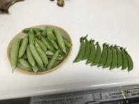 収穫物が徐々に増えてきましたよ~ - 家庭菜園ニストabuさん家の美味あれこれ
