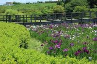 蟹ヶ谷公園と近くの田んぼ - つれづれ日記