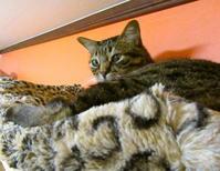 ストレスってなんなんなん?(何なの?) - 世帯主は猫なんです。