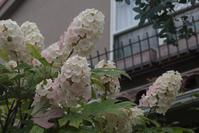 薄化粧 - CHIROのお庭しごと