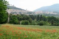 花と撮影に夢中でマダニに噛まれた話、潜むマダニにご用心 - イタリア写真草子 Fotoblog da Perugia