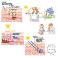 肌断面イラスト--美白サプリwebサイト - 女性誌を中心に活動するイラストレーター清水利江子の仕事ブログ