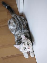 猫のお留守番 リンちゃん編。 - ゆきねこ猫家族