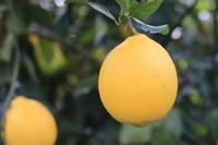亜熱帯の黄色のたまご - 困難の中にこそ美がある