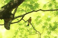 鳴声の賑やかな鳥さん♪ - happy-cafe*vol.2