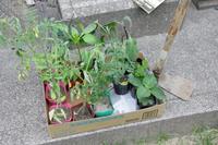 家庭菜園始まります。 - 平凡なプリウス乗りの日々