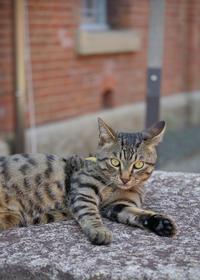 赤レンガの猫 - ぽとすのくずかご