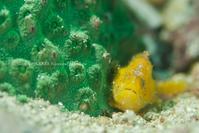 yellow&green - Diving Life ~Aita pe'a pe'a~