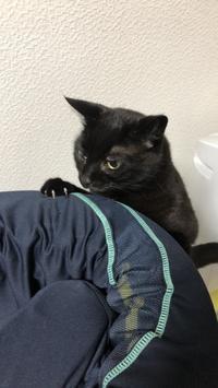 置き去り - いぬ猫フェレット&人間
