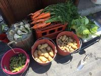 北摂の家庭菜園6月の収穫(空豆の集計) - 今夜の夕食