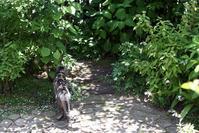 ヤマアジサイ東雲 - 小さな森のキキとサラ
