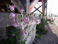 6月7日今日の写真 - ainosatoブログ02