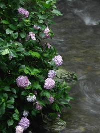 新しいプリント路線 - ナンちゃんの天然色写真&白黒写真