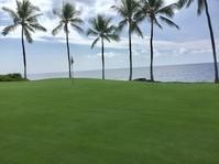 GN 再契約! - Books &Hawaii