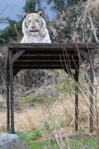 6月8日(金) 器 - ほのぼの動物写真日記