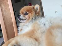 定期健診 6/8 - 老犬。犬生これから。