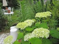 梅雨入りの庭 - 花の自由旋律