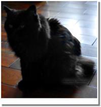 逆光の黒猫 - 白絹と桃花