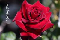 ベルベットの薔薇~ニコロ・パガニーニ - ♪Princess Craft  シニア素敵女子の集い