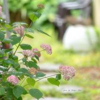 Pink Fairy - Berry's Bird