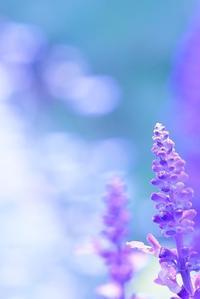 恋は紫色 - 美は観る者の眼の中にある