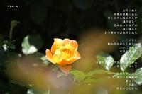 日常 - Poetry Garden 詩庭