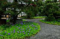 一初咲く得浄明院 - 花景色-K.W.C. PhotoBlog