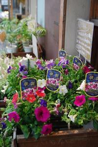 花苗入荷情報 - 花と暮らす店 木花 Mocca