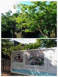 『小倉遊亀絵筆にこめた愛』@新潟市美術館 - ♪アロマと暮らすたのしい毎日♪