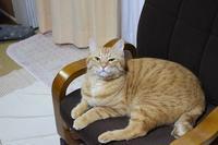 椅子取りゲーム - 杏的日乗