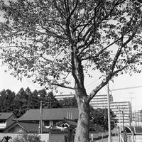 小公園の樹木たち - 照片画廊