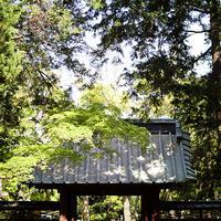 鎌倉五山第三位 寿福寺仏殿公開 - スナップ寅さんの「日々是口実」