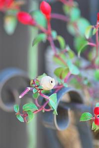 6/8ガーデニング熱 - 「あなたに似た花。」