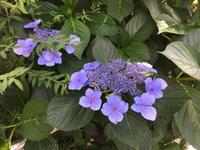 額紫陽花と褒められたコーデ - おしゃれを巡る冒険
