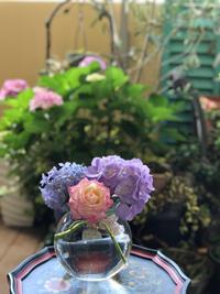 紫陽花の季節 - ハワイアントールペイント教室 アトリエMoani Ke 'Ala