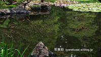 2018平安神宮神苑に行く1 - 写楽彩