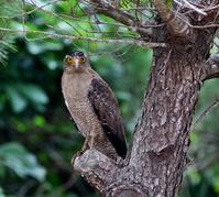 石垣島遠征(その3)・・・ - 一期一会の野鳥たち