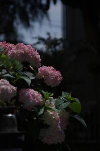 庭の花 - (鳥撮)ハタ坊:PENTAX k-3、k-5で撮った写真を載せていきますので、ヨロシクですm(_ _)m